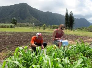 Projects_Oahu Bioenergy