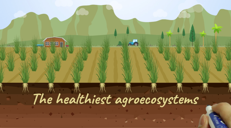 The healthiest agroecosystems
